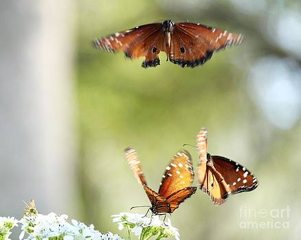 Butterflies Aflutter by Theresa Willingham