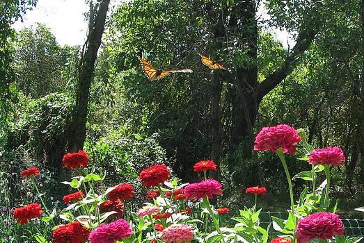 Butterflies by Barbara Ferreira