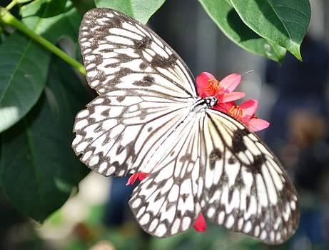 Butterfly 2 by Salomi Prakash