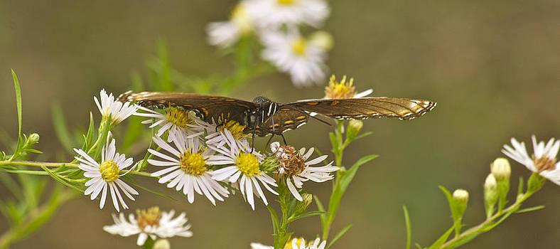 Michael Peychich - Butterfly 3319