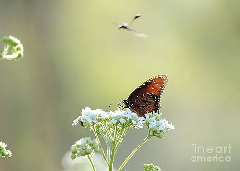Butterfly and Wasp by Theresa Willingham