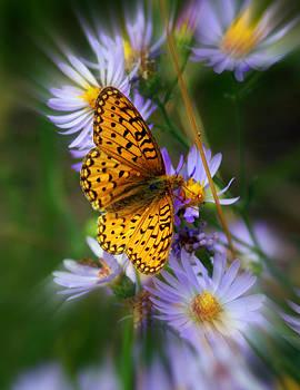 Marty Koch - Butterfly Blur