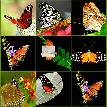 Butterfly Collage by Imagevixen Photography