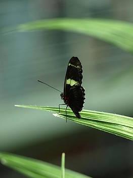 Debi Ling - Butterfly