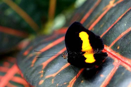 Butterfly Eye by Wendy Emel