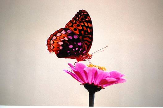 Butterfly Flower by Paul Thomley