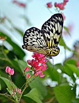 Marty Koch - Butterfly Glow