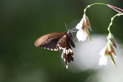 Butterfly  by Gonca Yengin