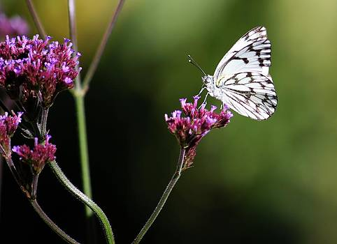 Butterfly Hogsback by Nolan Taylor