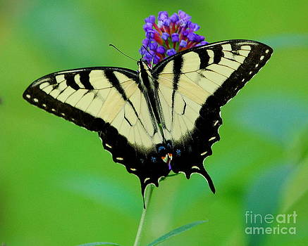 Butterfly II by Curtis Brackett