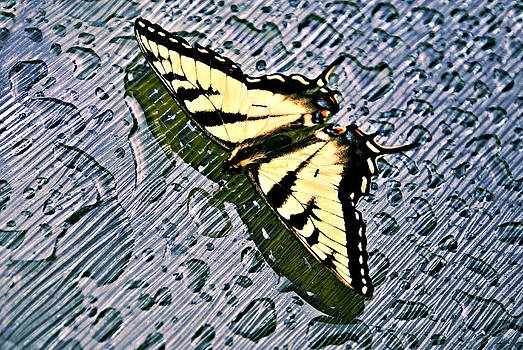 Butterfly in Rain by Susan Leggett