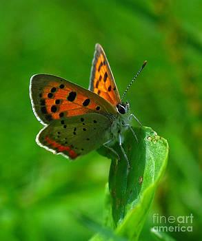 Juergen Roth - Butterfly