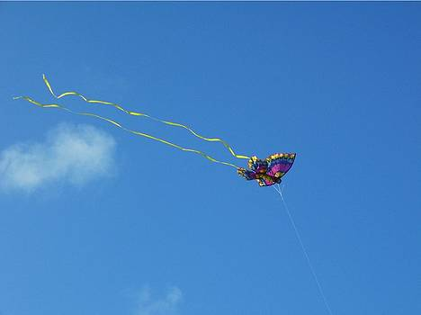 Butterfly Kite flying in the Blue Sky by Sharon Spade - Kingsbury