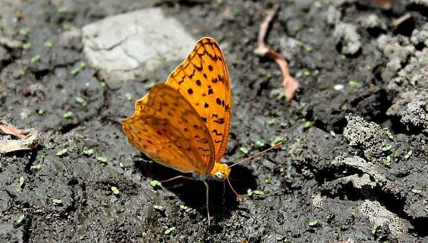 Butterfly by Manaswinee Mohanty