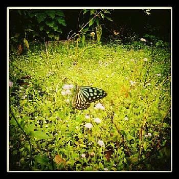 Butterfly by Nawarat Namphon
