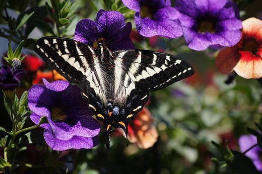 Butterfly photo by Wendy Emel