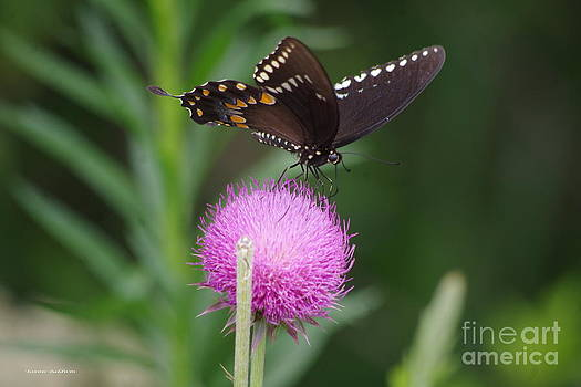 Tannis  Baldwin - Butterfly Thistle 2