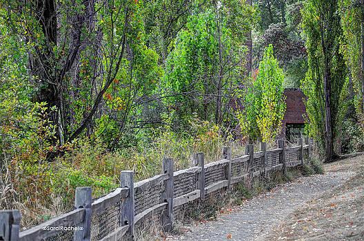 Cabin In The Woods by Sarai Rachel