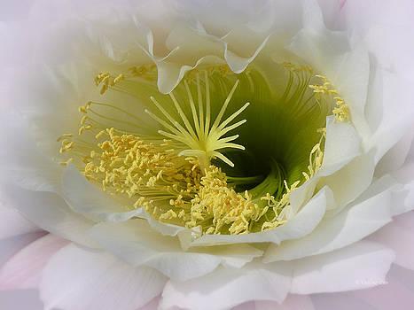 Xueling Zou - Cactus Blossom 2