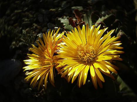Xueling Zou - Cactus Blossom 4