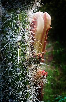 Xueling Zou - Cactus Blossom 9