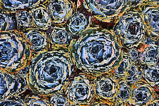 Cactus Blues by Yvonne Scott