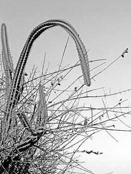 Cactus by Isabelle Mbore