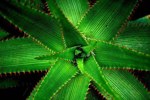 Cactus by Simon Clare