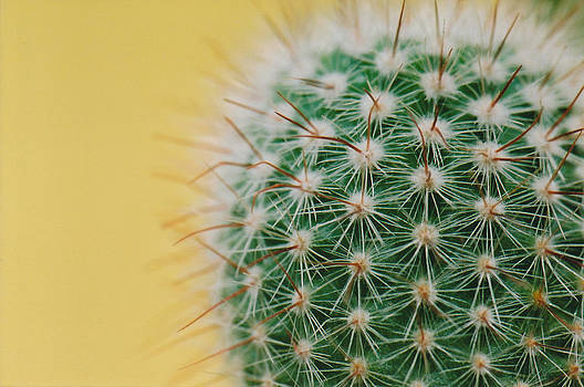 Cactus yellow by Brian Beller