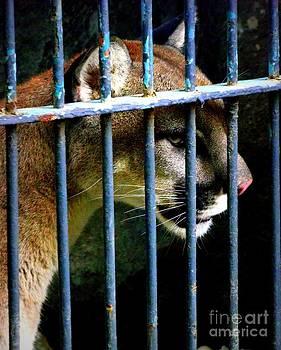 Shawna Gibson - Caged Beauty