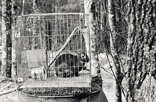 Caged Rabbit by Floyd Smith