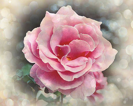 Terry Eve Tanner - California Rose