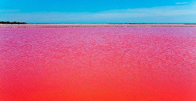 Camargue south French salklake by Sunkies Fang