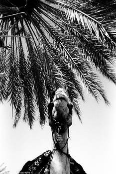 Isaac Silman - Camel and palm tree