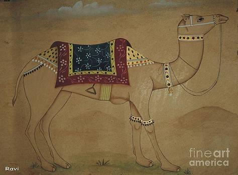 Camel  by Ravi Kumar