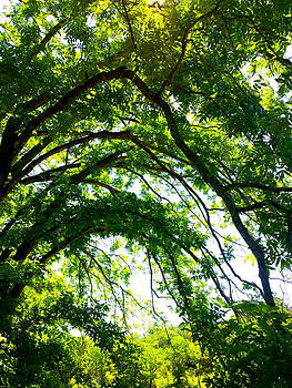 Canopy by Amber Hennessey