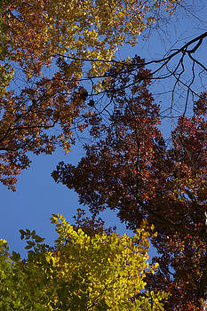 Canopy by Susan Morris