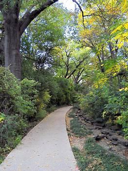 Lynnette Johns - Canopy Walkway