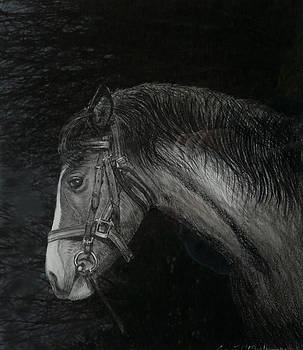 Capall Doracha by Tomas OMaoldomhnaigh