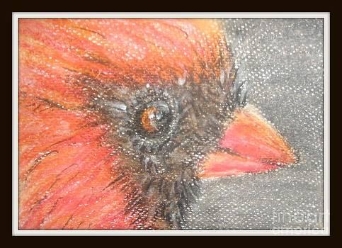 Cardinal by Foqia Zafar