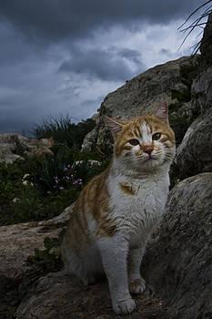 Cat by Adeeb Atwan