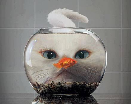 Cat And Fish by Sunkies Fang