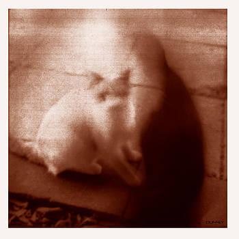 DOUG  DUFFEY - CAT AND THREE FOURTHS