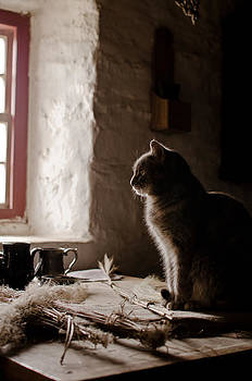 Cat at the Window by Swift Family