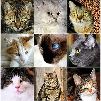 Cat Collage by Imagevixen Photography