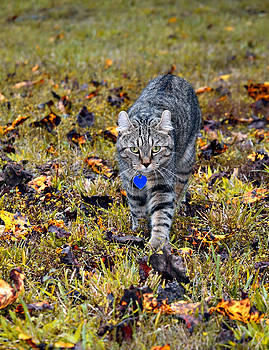 Cat in Autumn by Susan Leggett