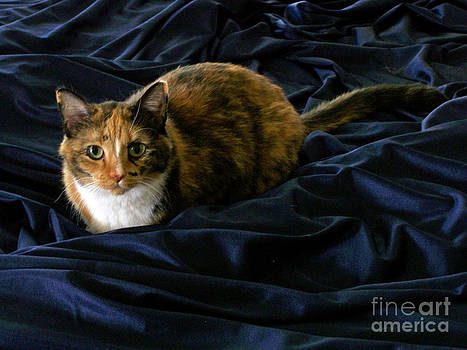 Cat in Blue Satin by Maureen Ida Farley