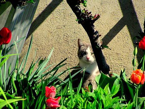 Cat in the Garden by Amy Bradley
