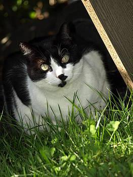 Debi Ling - Cat in the grass