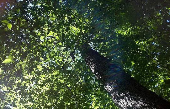 Cat in tree by Barbara Ferreira